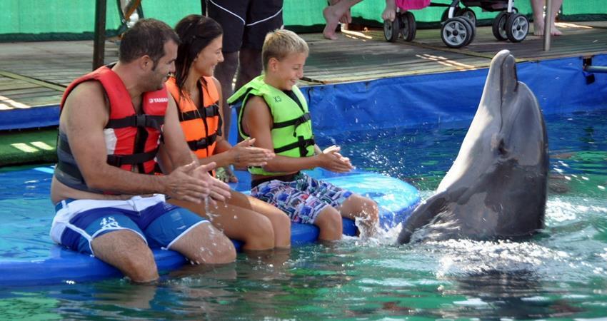 Увидеть дельфинов в Мармарисе