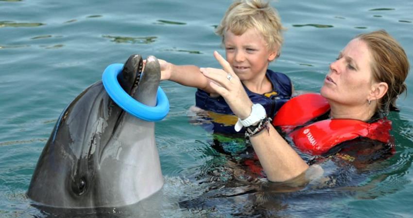 Плавание с дельфинами в Мармарисе